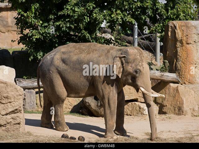 Elephant eyelashes stock photos elephant eyelashes stock for Designhotel elephant prague 1 czech republic