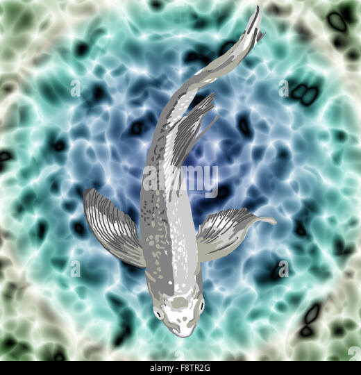 Koi fish illustration stock photos koi fish illustration for Silver koi fish