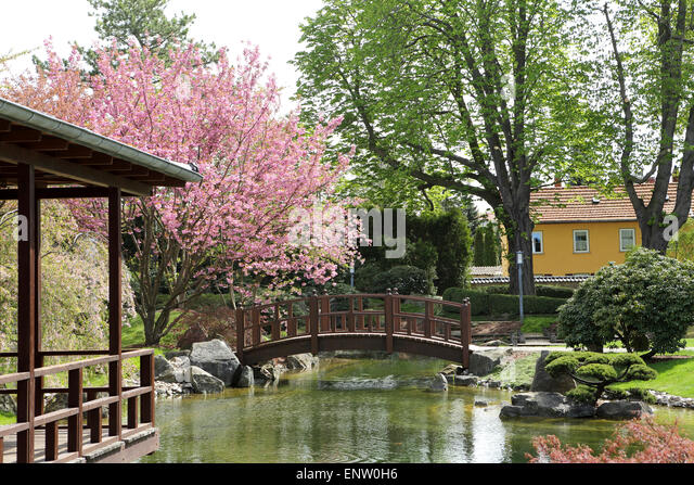an arched bridge by blossoming cherry trees in the japanese garden japanischer garten in - Japanese Garden Cherry Blossom Bridge