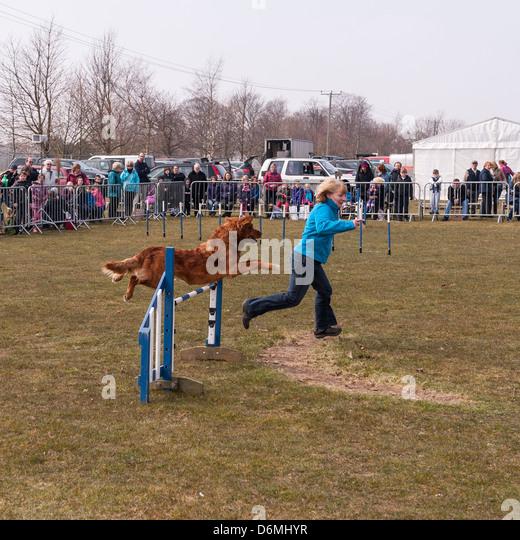 Dog Agility Training Norwich
