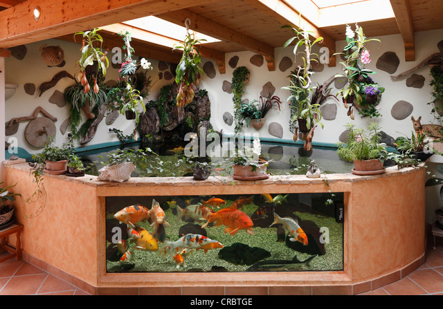 Koi aquarium stock photos koi aquarium stock images alamy for Koi tank size