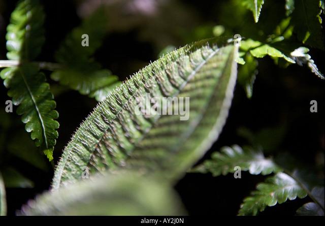 0773 Stock Photos Amp 0773 Stock Images Alamy