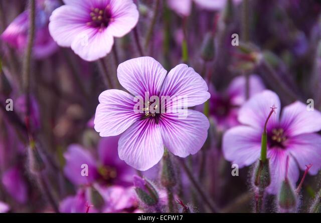 small purple flowers stock photos  small purple flowers stock, Beautiful flower
