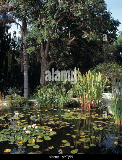 orotava botanical garden tenerife stock photos orotava. Black Bedroom Furniture Sets. Home Design Ideas