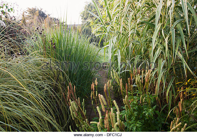 Ornamental grasses border grasses stock photos for Ornamental grass border plants