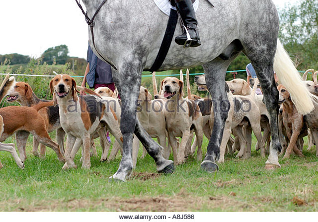 Pack of hunting dogs