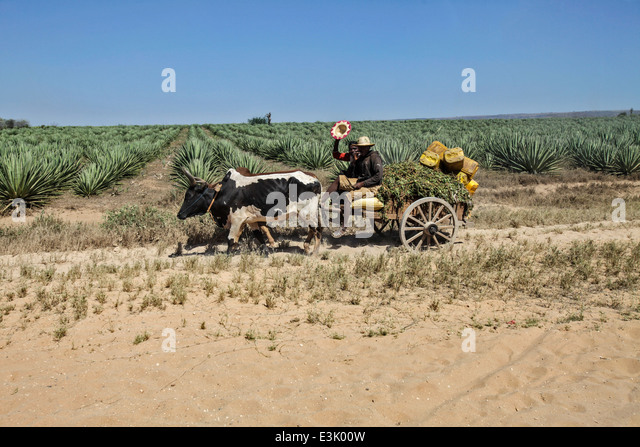 Malagasy Farming Stock Photos & Malagasy Farming Stock ...