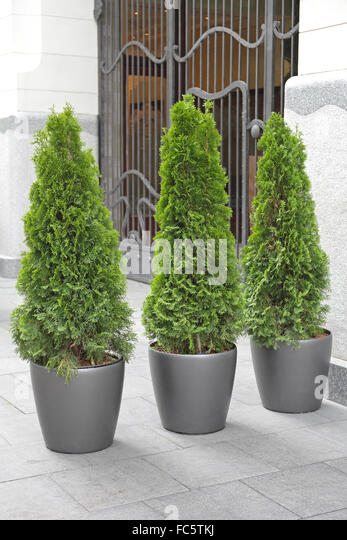Small Trees In Pots Stock Photos Amp Small Trees In Pots