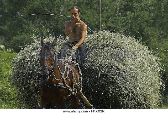 Carpathian Romani