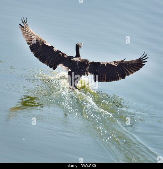 lake cormorant black personals Fargo vacation rentals « » press to favorite this post mar 20 wonderful 3/2 + rec rm big cormorant lake w/ large favorite this post apr 10 black hills.