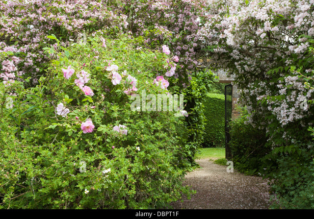 Awesome white house rose garden pictures gallery garden for White house rose garden design