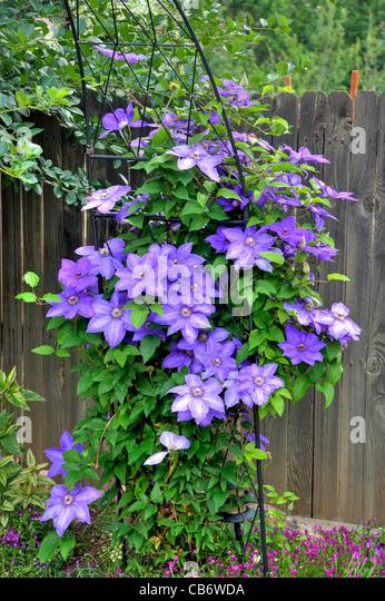 large flowered stock photos large flowered stock images. Black Bedroom Furniture Sets. Home Design Ideas