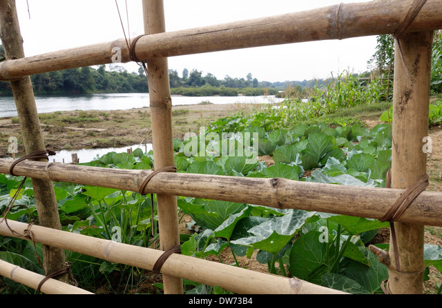Bamboo Fence Protecting A Garden Next To The Nam Lik River In Laos.   Stock
