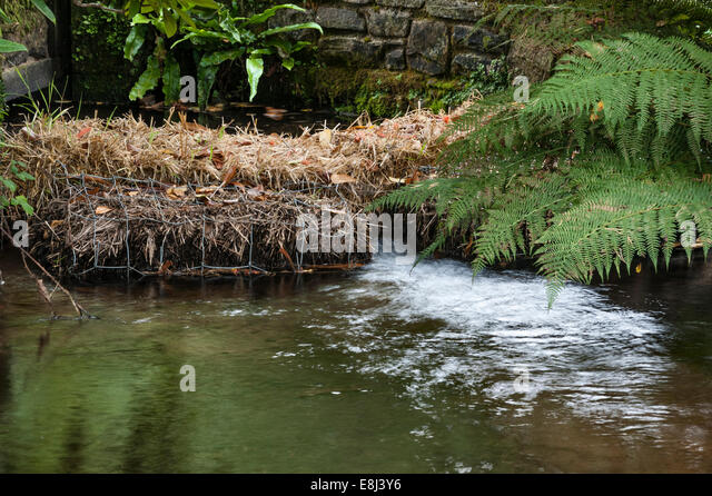 Barley Straw Water Stock Photos & Barley Straw Water Stock Images ...