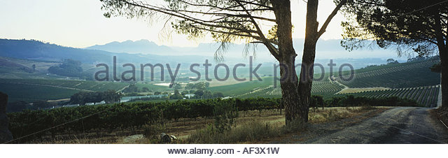 Stellenbosch stock photos stellenbosch stock images alamy for Jardin winery south africa