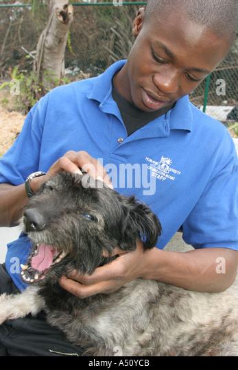 Dog Adoptions In Miami Beach