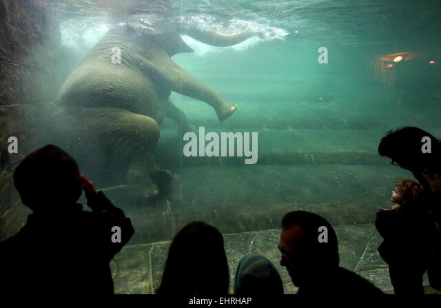 Pregnant elephant stock photos pregnant elephant stock - Swimming pool leipzig ...