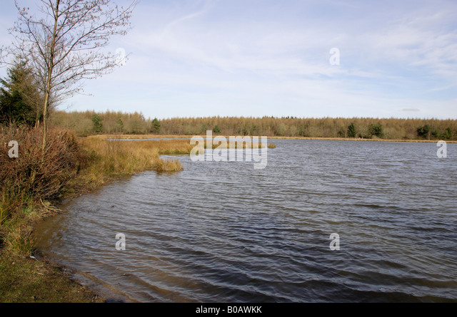 Forest Of Dean Lake Stock Photos & Forest Of Dean Lake ...