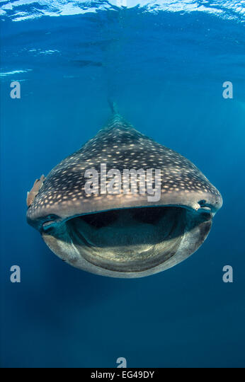 Ram fishes stock photos ram fishes stock images alamy for 99 5 the fish