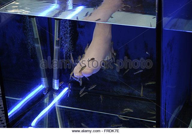 Kangal stock photos kangal stock images alamy for A salon called fish