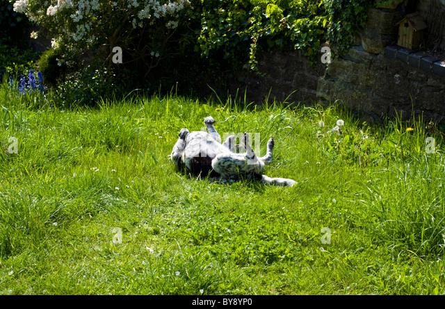 ... Not Cat Stock Photos & Pet Play Garden Not Cat Stock Images - Alamy