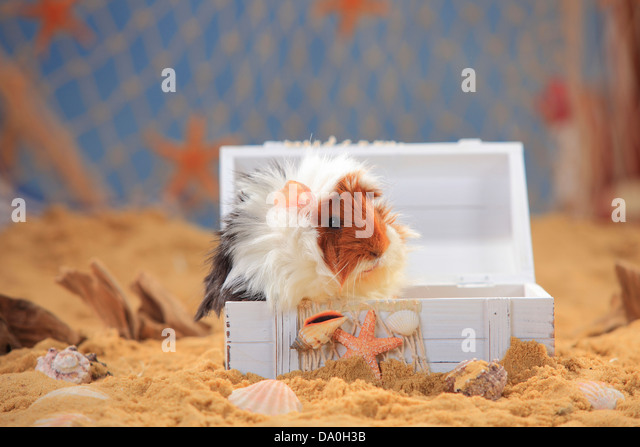 Tortie With White Stock Photos u0026 Tortie With White Stock Images - Alamy