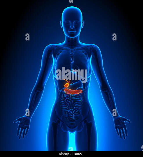 Human Pancreas Stock Photos & Human Pancreas Stock Images ...