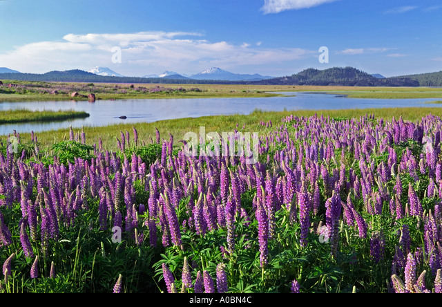 Picnic Basket Ennis : Meadow wildflowers stock photos