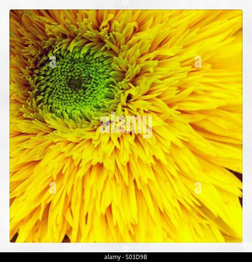 yellow-flower-s03d9b.jpg
