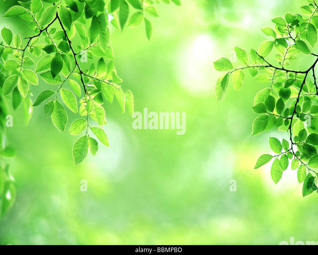 Branched Stock Photos Amp Branched Stock Images Alamy