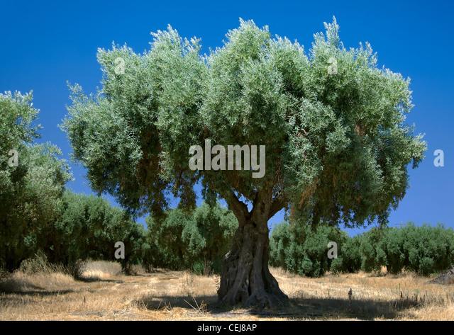 Olives very vintage