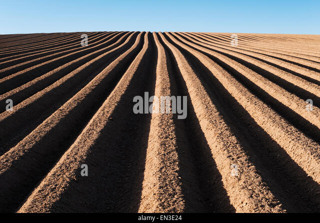 Herefordshire Uk A Newly Ploughed And Planted Potato Field In Spring The Red
