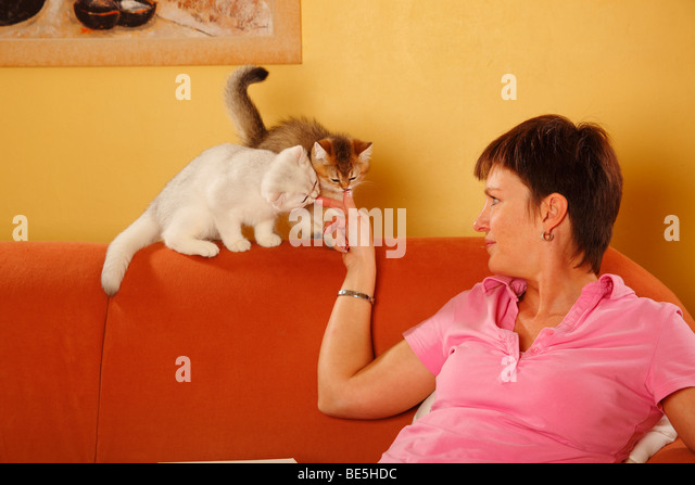 Cat Couch Woman Stock Photos Amp Cat Couch Woman Stock