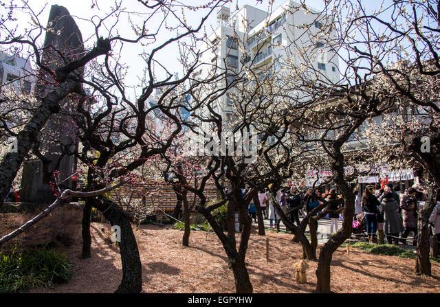 Ume Festival Japan Stock Photos & Ume Festival Japan Stock Images - Alamy