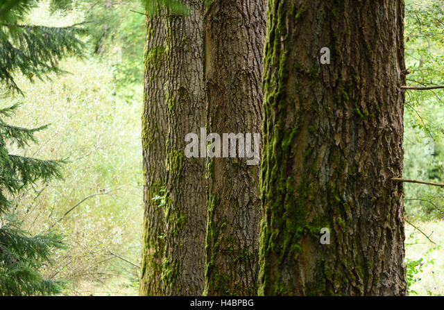 what is a tree trunk covered with 4 letters - populus tremula stock photos populus tremula stock