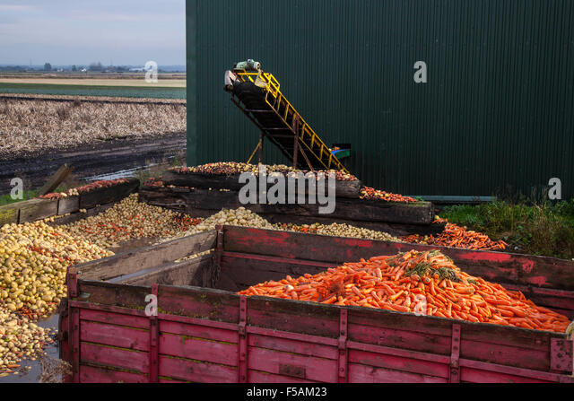 Food Waste Reduction Could Help Feed World S Starving