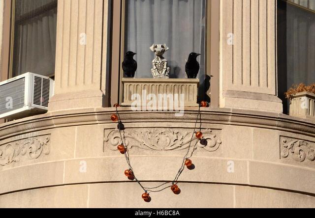 skeleton dog and crows halloween decoration park slope brooklyn new york pumpkin lights simon leigh