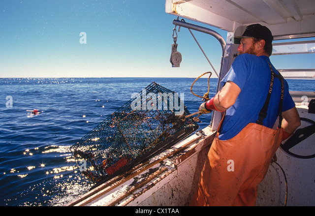 Image gallery lobster fisherman for Lobster fishing san diego