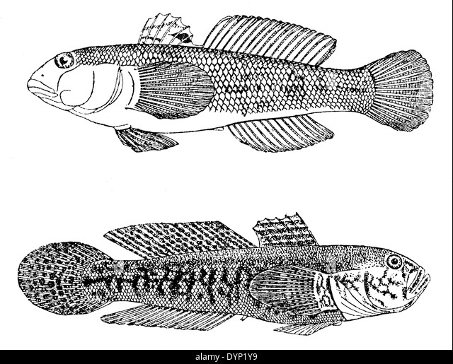 invasive species coloring pages - photo#26