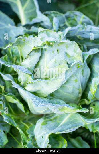 Agricultural Pests Stock Photos Amp Agricultural Pests Stock