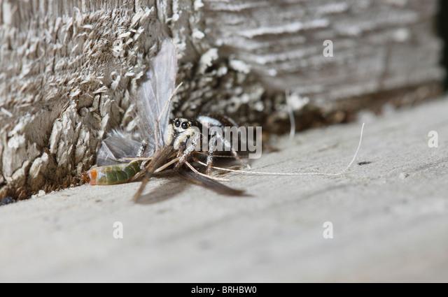 Lilacbreasted roller | Birds | Pinterest | Photos, Stock photos ...