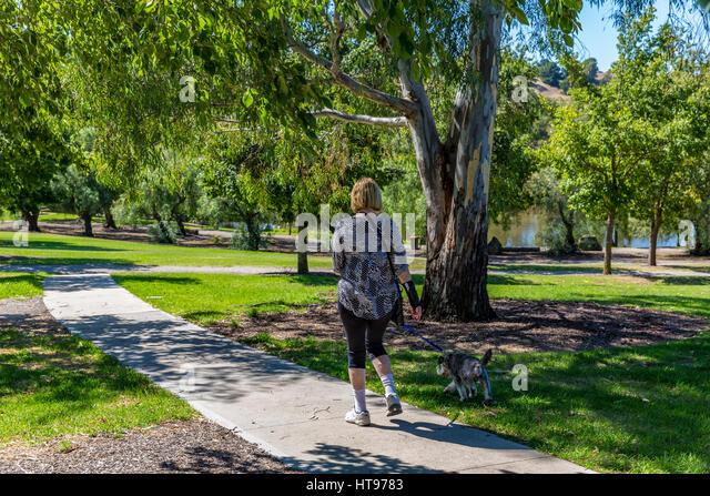 A Woman Walks Her Dog On Leash At Bicentennial Park Sunbury Vic Australia