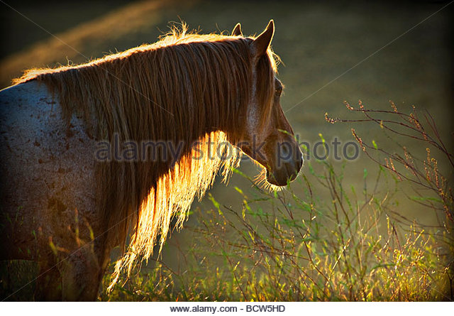 long manes stock photos - photo #2