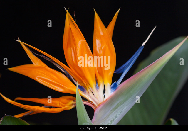 orange exotic flower stock photos  orange exotic flower stock, Beautiful flower