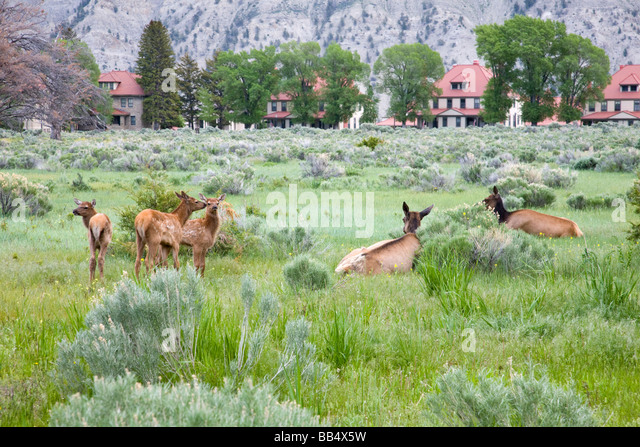 elk park single parents Official elk park apartments for rent see photos, current prices, floor plans, and details for 128 apartments in elk park, nc.