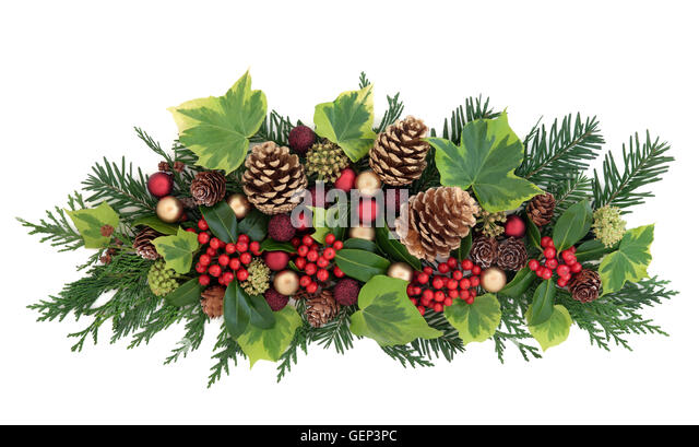 Sprigs Of Holly Stock Photos Sprigs Of Holly Stock