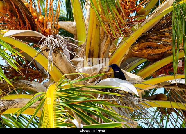 Coconut Palm Tree Bird Stock Photos & Coconut Palm Tree ...