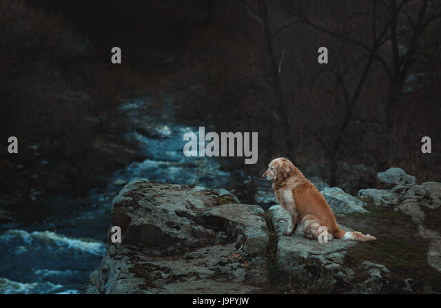 Sad dog is sitting on the edge of a precipice. At the bottom of the chasm the river flows. - Stock Image