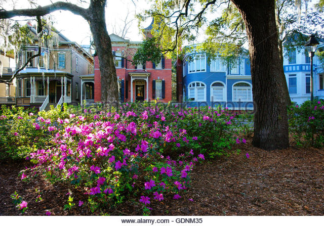Azaleas And Victorian Homes In The Historic District Of Savannah Georgia