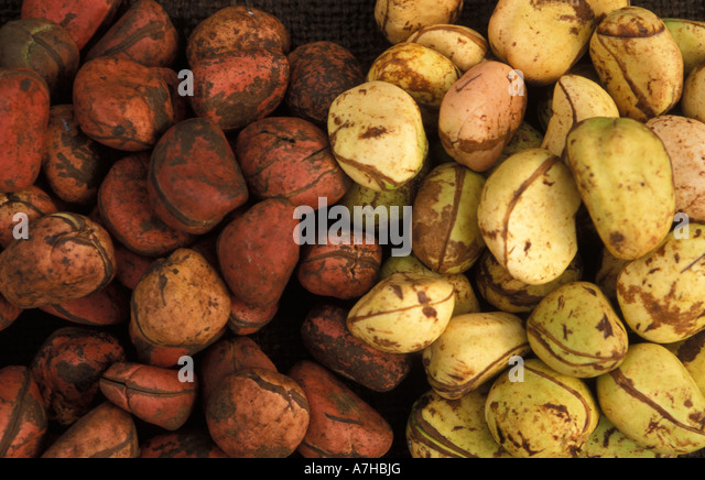 image West african immigrant nuts on cute euro girl039s face